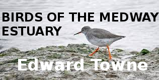 Birds of the Medway